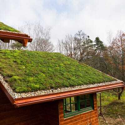 dachbegruenung-gruenes-dach